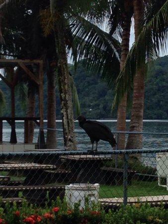 Golfito, Kosta Rika: Hotel Samoa del Sur
