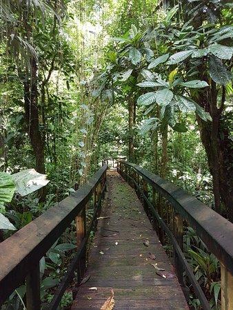 Sarapiqui, Costa Rica: 20171122_112051_large.jpg
