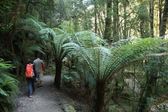 Strahan, Austrália: rainforest walk