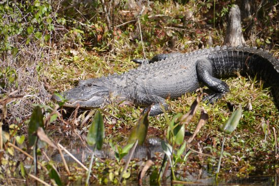 Saint Marks, FL: Wakulla River Park