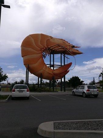Ballina, Australia: IMG_20171123_115520_large.jpg