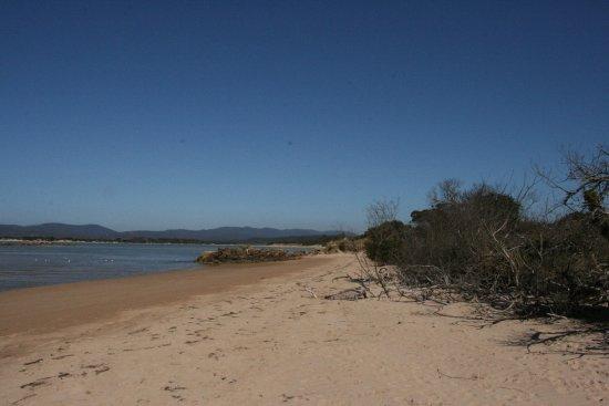 shearwater beach
