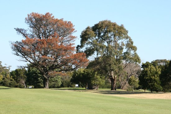 Shearwater, Australia: Golf cousre