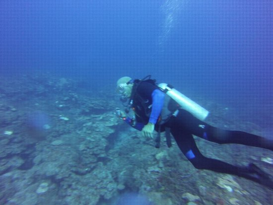 Akumal Dive Shop: Diving in the 2nd largest coral reef in the world