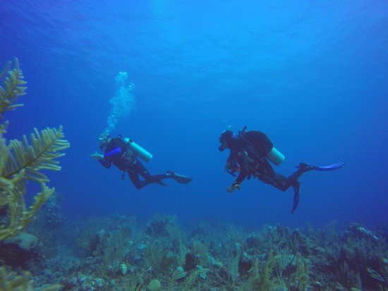 "Akumal Dive Shop: Diving with the ""condor"