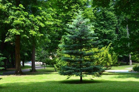 Sklene Teplice Thermal Spa: В парке