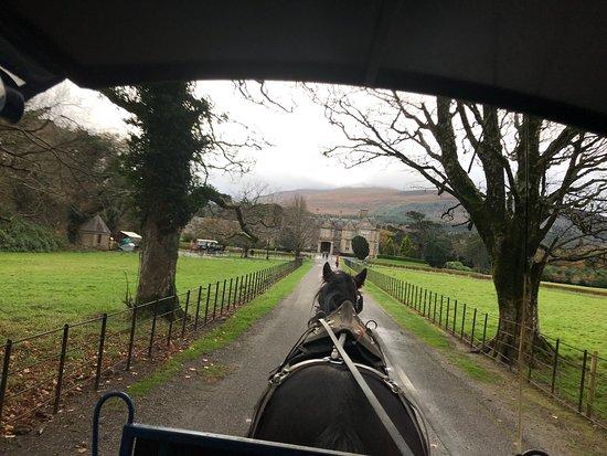Muckross House, Gardens & Traditional Farms: photo3.jpg