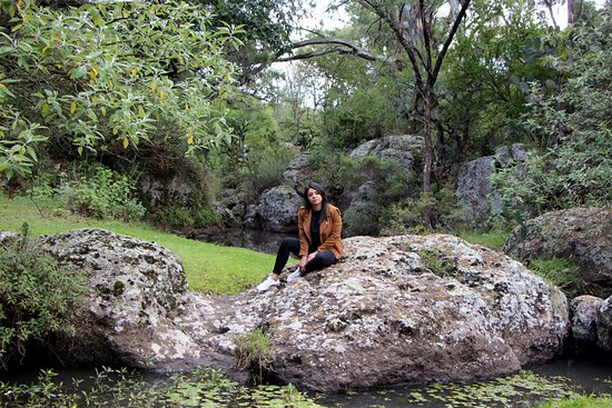 Mision La Muralla: El hotel tiene un bosque