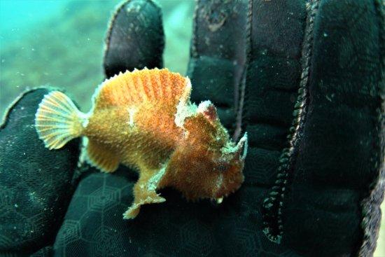 McLaren Vale, Australia: lovely little frog fish