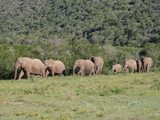 Amakhala Game Reserve, South Africa: On game drive