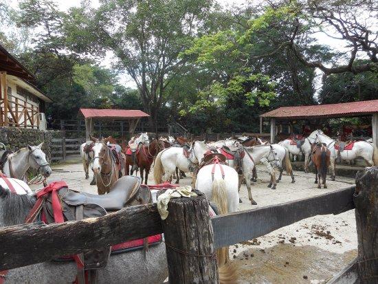 Hacienda Guachipelin: Voor paardenliefhebbers ideaal, keuze en optimale begeleiding.