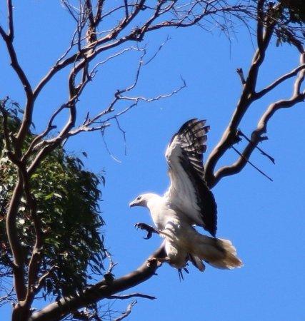Arthur River, Australien: photo1.jpg
