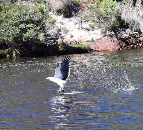 Arthur River, Australien: photo2.jpg