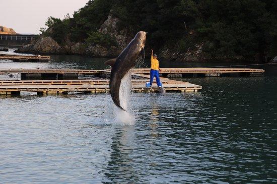 Taiji-cho, Japonya: whale show