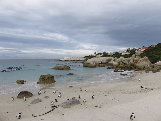Boulders Beach: Boulder's Beach in it's mid-afternoon sleepiness