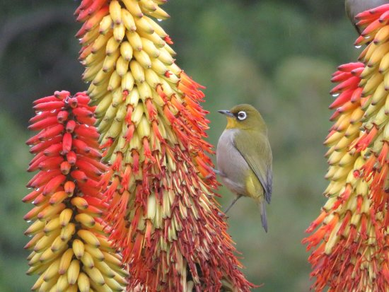 Newlands, South Africa: Bird life on full display