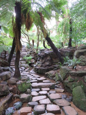 Newlands, South Africa: Fern garden paved walkway