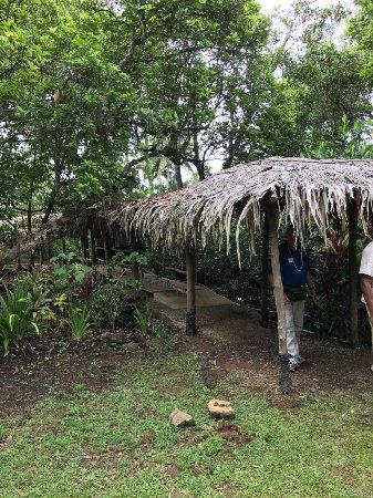 Suva, Fiyi: Nature walk at Orchid Island