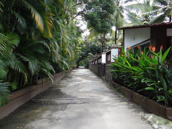 Swimming Pool Picture Of Parampara Resort Spa Coorg Kushalnagar Tripadvisor