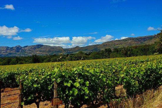 Constantia, South Africa: Zeit nehmen und genießen