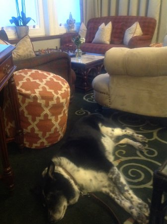 The Headland Hotel & Spa - Newquay: Well rested dog