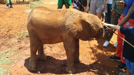 David Sheldrick Wildlife Trust: 20170925_112311_large.jpg