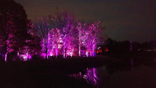 Light show at the Morton Arboretum Illuminations.....