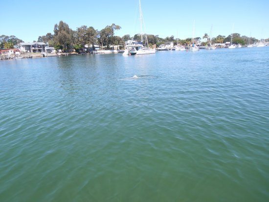 Tin Can Bay, Australia: Dolphins shouldn't be tempted into marinas.