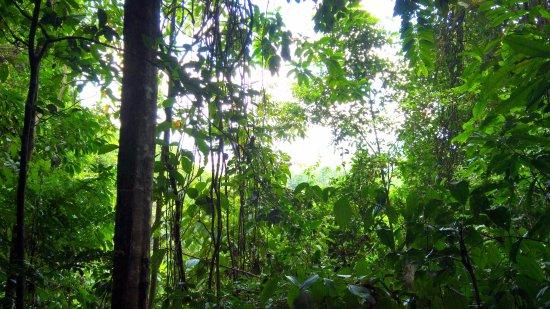 Matoury, Fransk Guyana: un regard vers la canopée