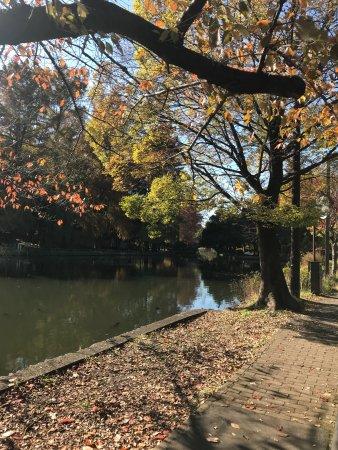 Shakujii Park: photo0.jpg