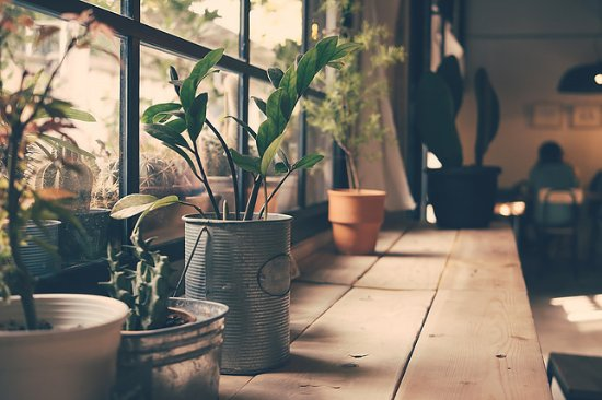 Norwich, Canada: Plants