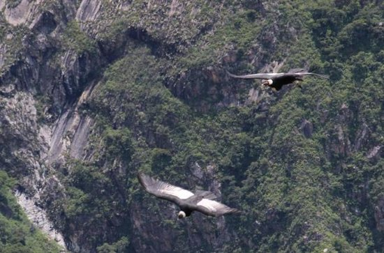 Apurimac Canyon with Condor Viewing...
