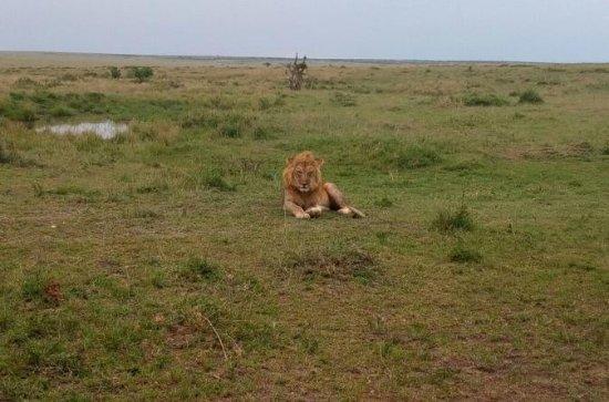 Lac Nakuru National Park Safari De...