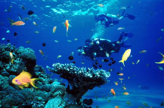 Full Day Diving Tour in the...
