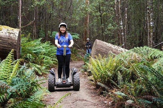 Hollybank Treetops Adventure - Segway Tour