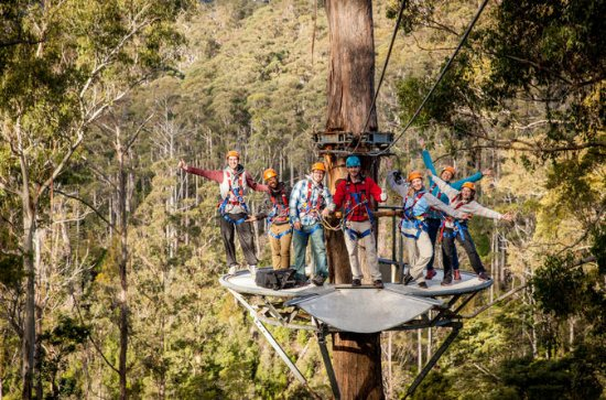 Hollybank Treetops Adventure - Canopy...