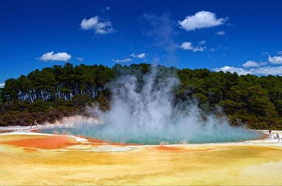 Wai-O-Tapu : Lady Knox Geyser : Champagne Lake and The Living Maori...
