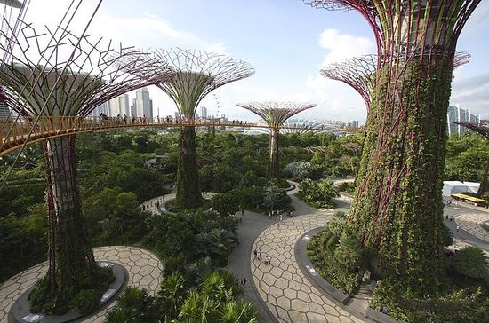 Morning Workout at Gardens By The Bay and Walk or Jog to Chinatown...