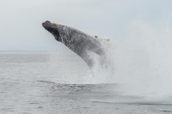 Whale Watching Tour in Mirissa from...