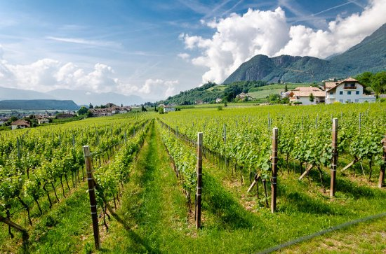 Half-Day White Wine tour from Lake...