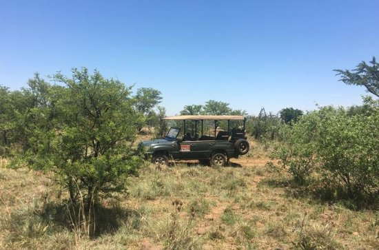 Half day safari tour from Johannesburg