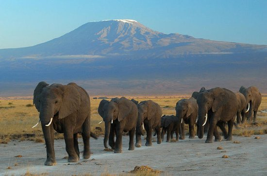 Overnight tour to Amboseli National