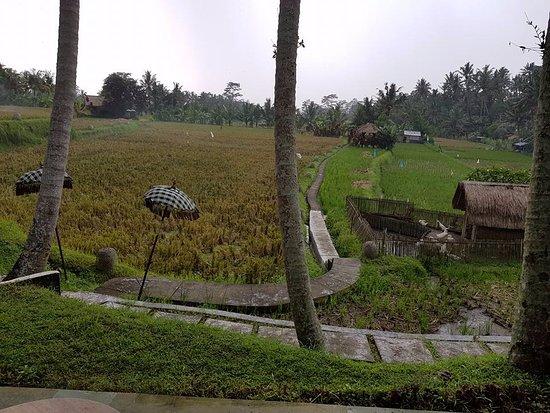 Terracotta: rice field