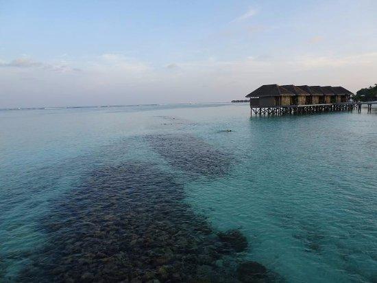 Meeru Island Resort Food Reviews