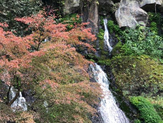Tamatare Falls
