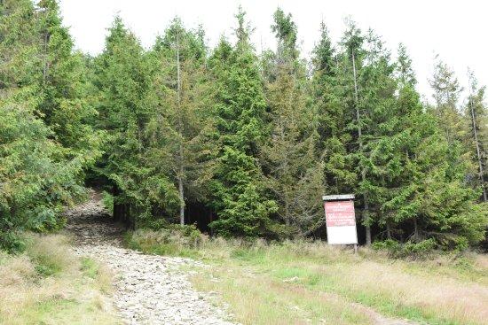 Mogielica Nature Reserve