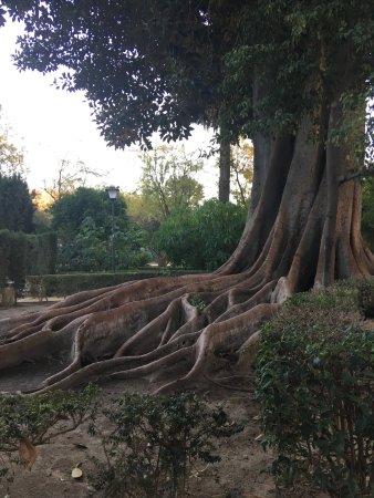 Jardines de murillo sevilla spanien anmeldelser for Jardines de murillo
