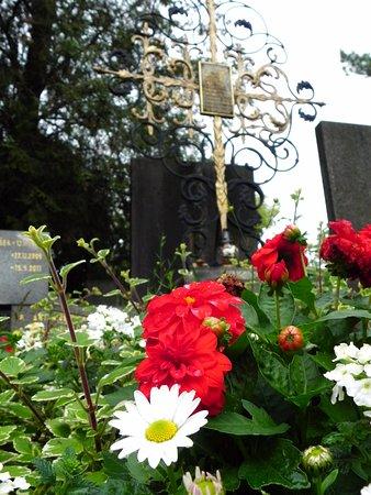 National Cemetery: 純粋にお花を愛でるのもいい。心が落ち着く