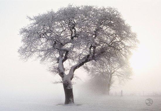 Nordstrand, Duitsland: Umgebung Winter