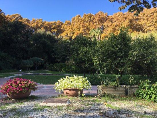 Cafeteria jardin botanico la concepcion malaga for Jardin botanico numero telefonico
